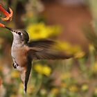 A Hummers World by Jen Millard