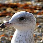 Up Close by saleire