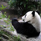 Panda Food by Anne Smyth
