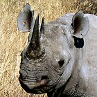 Black Rhino Portrait by Graeme  Hyde