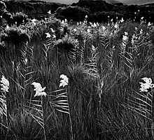 Backlit Reeds, Tidal river, Wilsons Promontory by Mark Boyle