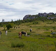 Grayson Highlands Ponies by bcollie