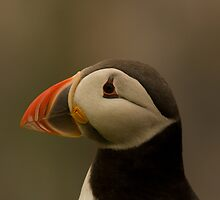 Atlantic Puffin by Jon Lees