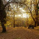 Autumn Rays by Michael Humphrys
