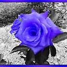 Bluey Purple Rose by PrettyKitty
