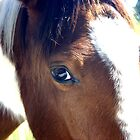 The Caring Eye of the Gentle Pinto Filly Savanna by LividPhoto