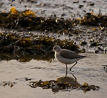 Greenshank by Jon Lees
