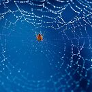 Itsy Bitsy Spider by HelenaBrophy