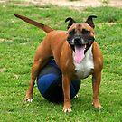 Soccer Dog by Casey Herman