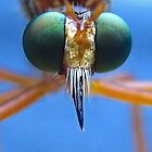 Robberfly's Face by Heavenandus777
