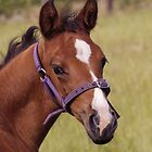 Portrait of a Playful Young Foal  by Buckwhite