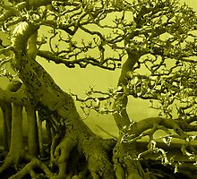 Bonsai In Green by Charuhas  Images