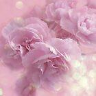 Carnations by Lauren Andalora