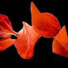 Red by Steve plowman