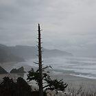 Pacific Coast by Sandra Pearson