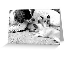 Shelter Greeting Card