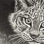 Curious Kitten - Canadian Lynx ACEO by John Houle