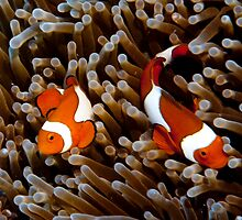 Which one is Nemo? They all look the same! by Mark Elshout
