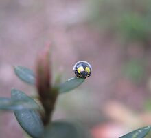 Little Beetle Looking At Us by Vanessa Barklay