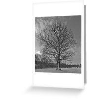 Tree at Howe Wood Greeting Card