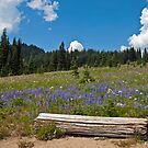 Sit Among the Lupine by Barb White