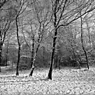 Howe Wood by JMChown