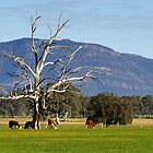The Grampians by Darren Stones