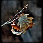 Autumn Poem by makbet666