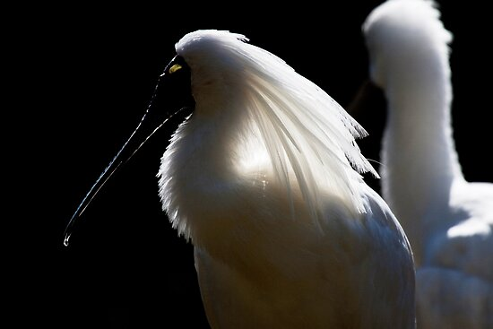 Spoonbill by Margot Kiesskalt