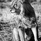 Panthera Leo by Skyjuggler