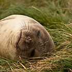 Snoozing by Phill Danze