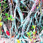 Mangrove Beginnings by Sharon Davey