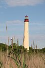 Cape May Lighthouse through the Reeds by Kim McClain Gregal