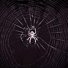 Web by Jason Lee Jodoin