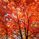 Soooo Autumn by NatureGreeting Cards ©ccwri