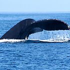 Humpback Whale  by Peggy Berger