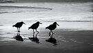 Oyster Catcher's Waltz by Kathy Reid