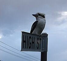 Kooka on High by KazM