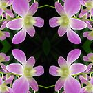 Purple Orchid Abstract by TriciaBacal