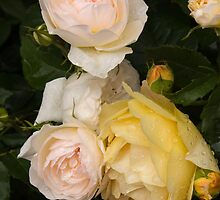 Beautiful English Roses by Susan Leonard