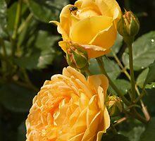 Yellow Roses by Sue Leonard