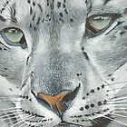 Snow leopard  by Robbiegraham