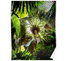 tropical canopy ... Poster