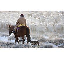 Sheep Herding, Red Desert, Wyoming Photographic Print