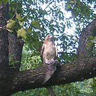 EAGLE HUNTING by elatan