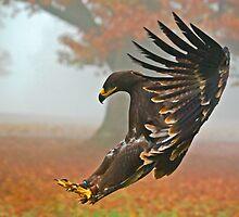Eagle Landing by Gary Moffat