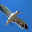 Seagull by Eyal Nahmias