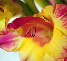 TOUCH OF COLOR by Michelle BarlondSmith