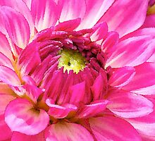 Dahlia in water color by Jeffrey  Sinnock