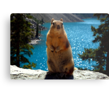 King Of The World Metal Print